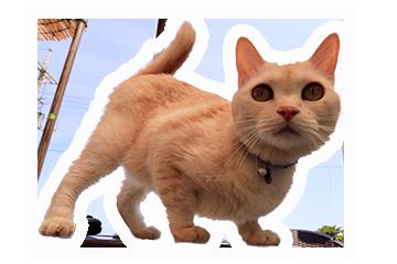 あーりおーるの猫メリィ