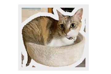 あーりおーるカフェ&ハウスの猫メリィ