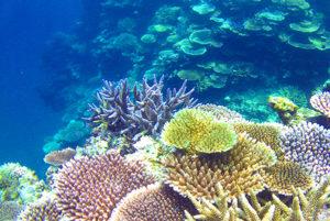 あーりおーるの近くの海のサンゴ