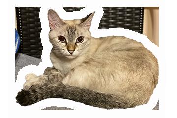 あーりおーるカフェ&ハウスの猫トロン