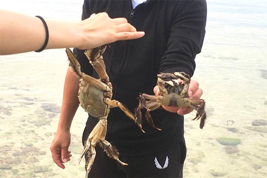 蟹(島あそび あーりおーる)