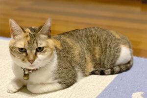 あーりおーるの猫、メイ